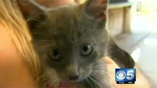 Kitten rescued from Peoria manhole
