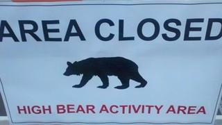'Bearly' a break: AZ sees 3rd recent attack