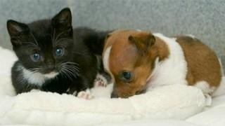 SLIDESHOW: Cute duo best friends for life