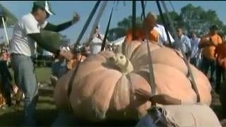 VIDEO: Wow! 1,872 pound pumpkin