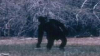 SLIDESHOW: Bigfoot in Arizona?