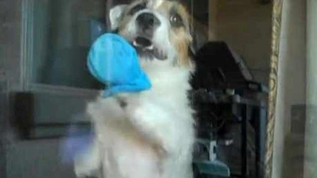 SLIDESHOW: Dog trained for house chores