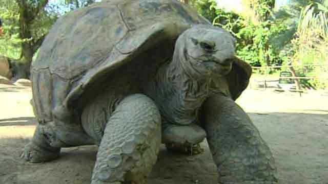 SLIDESHOW: Big tortoises weigh-in