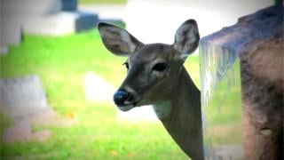 Doe living in cemetery shot dead