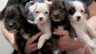 Puppies saved in daring rescue