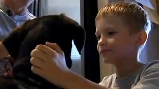 VIDEO: Service dog helps diabetic boy