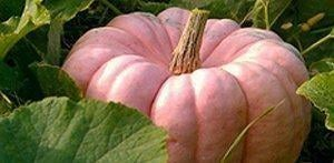 PHOTOS: AZ's pink pumpkin patch