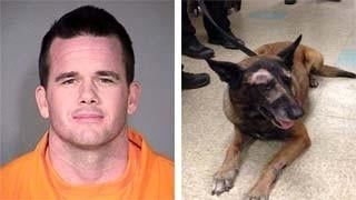 PD: Suspect stabbed K-9 multiple times