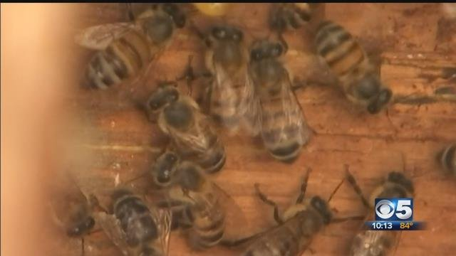 Bee expert explains recent string of swarms, attacks