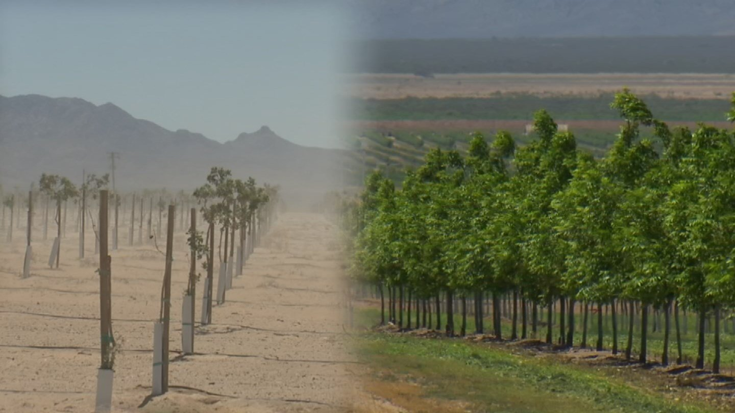 A new farmer's land compared to FICO's pecan orchard in southeastern Arizona. (Source: KPHO/KTVK)