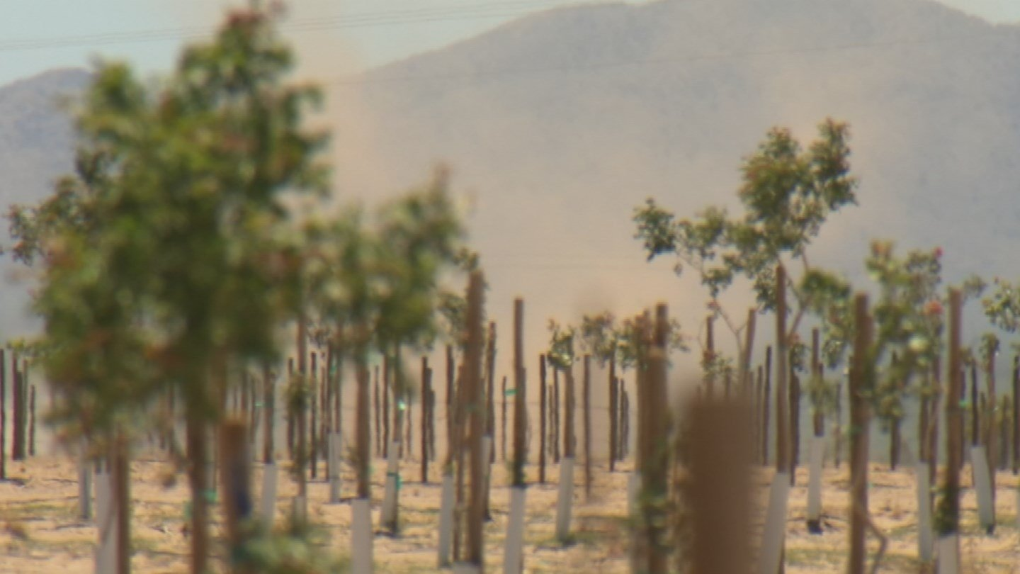 Locals say you can spot the new farms by looking for the dust devils. (Source: KPHO/KTVK)