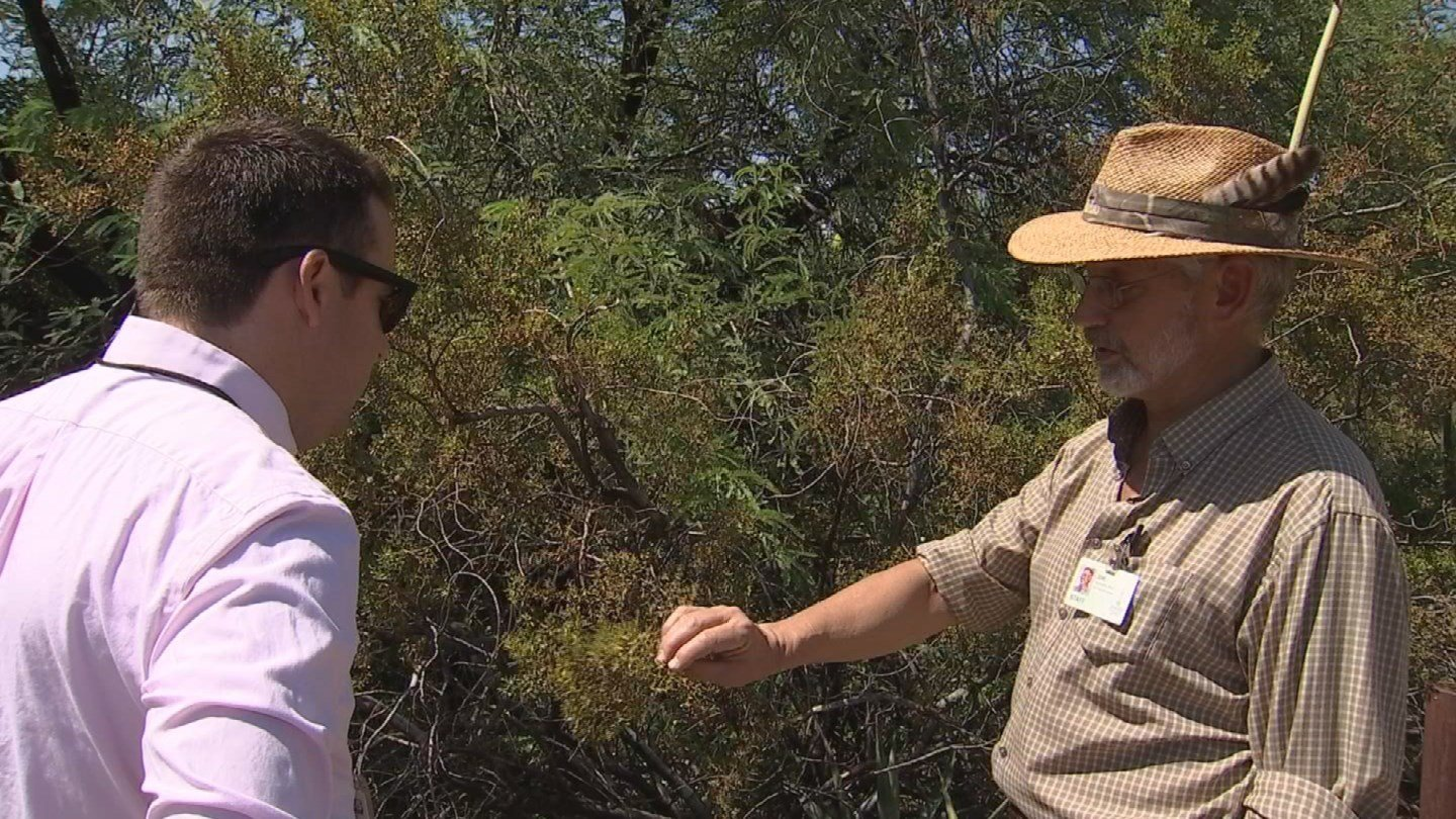Joe McAuliffe, the director of research at the Desert Botanical Garden in Phoenix, said what you're smelling is the creosote bush. (Source: CBS 5 News)