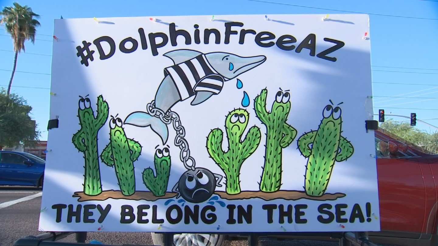 Dolphin Free AZ is a grass-roots organization whose sole purpose is to raise awareness and opposition to Dolphinaris. (Source: CBS 5 News)