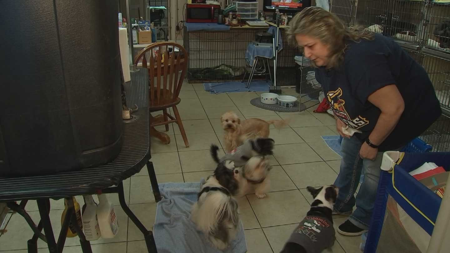 Julie Plumber has been taking in dogs for years. (Source: KPHO/KTVK)