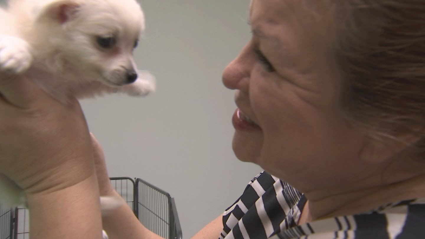 Christina Alfaro has rescued hundreds of animals. (Source: CBS 5)