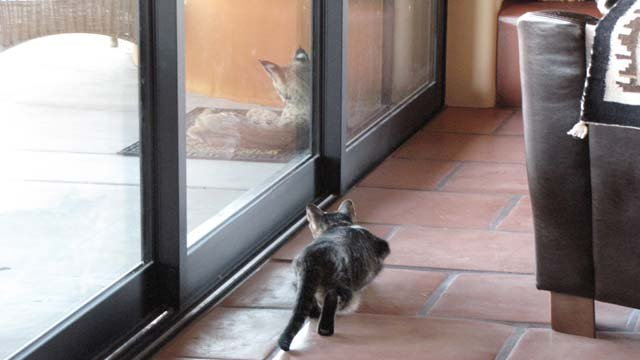 Bucky Marshall sent these photos of the bobcat sitting outside the door. (Source: Bucky Marshall)