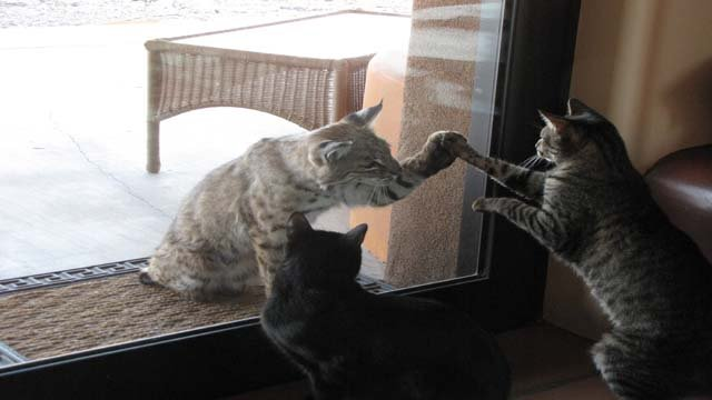 Marshall also captured the two animals touching paws. (Source: Bucky Marshall)