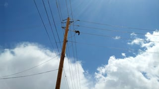 Cat caught on power lines