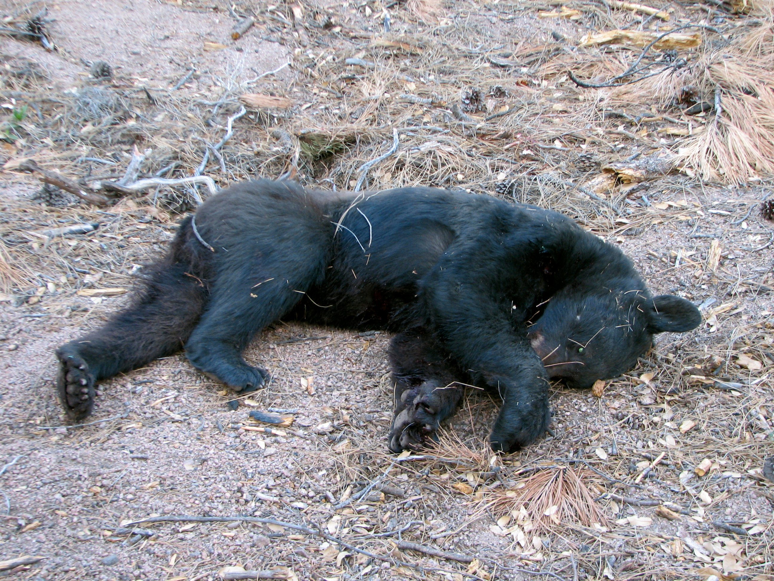 3 bears test negative for rabies after az attacks for Wyoming game and fish draw results