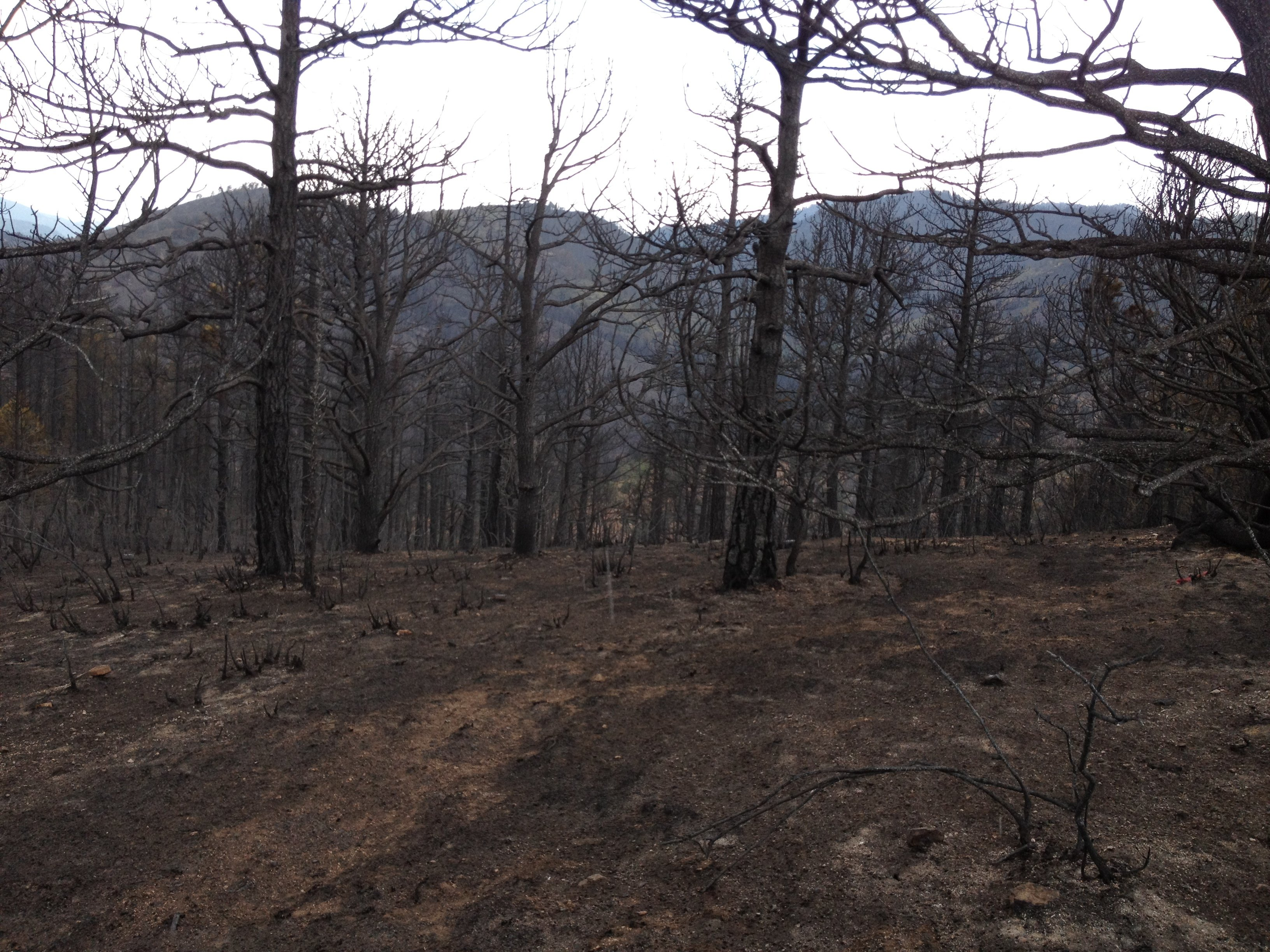Photo by: Tammy Leitner /  The charred  forest goes on for miles and miles.