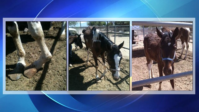 Horses found thin and malnourished