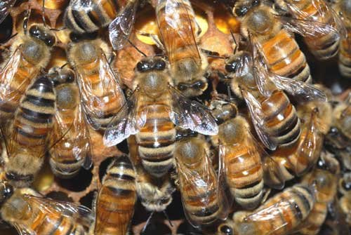 A 91-year-old Scottsdale man was stung more than 50 times in a bee attack Tuesday.