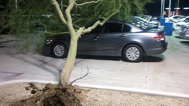 Fallen trees and limbs caused extensive damage to cars in the lot of Bell Honda.
