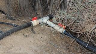Irrigation system emitted water through an underground drip system.