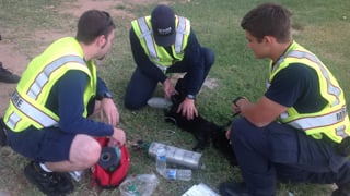 Cat in Mesa fire rescued, resuscitated.