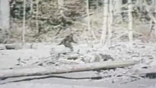 Bigfoot sighting?