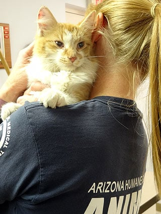 (Source: Arizona Humane Society) An orange and white domestic cat was saved from the needles of a cactus by Arizona Human Society Emergency Animal EMTs.