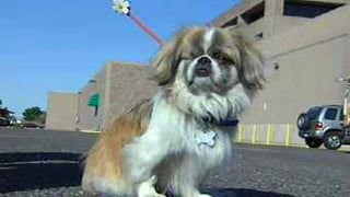 &quot;Buddy&quot; (Source: KPHO-TV)