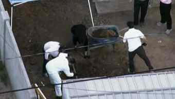 Police personnel seen digging in the backyard of a Phoenix home.