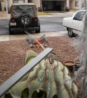 A helpful neighbor used his Jeep to pull the cactus away.  (Source: Jadiann Thompson, cbs5az.com)