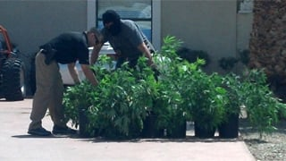 Some of the 100 pot plants found growing inside. (Source: Christina Batson, cbs5az.com)