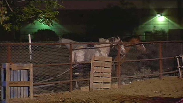 Some horses were trapped by the flames until firefighters could herd them to this safe area. (Source: CBS 5 News)