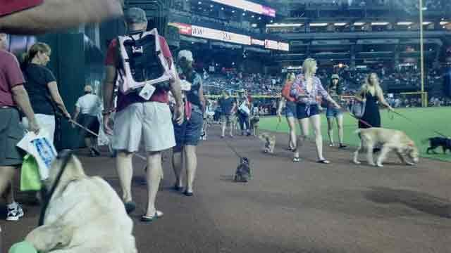 Owners and their K-9 pals participated in a parade around Chase Field (Christina Batson, cbs5az.com)