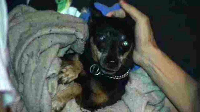 A dog belonging to the man was found on a back porch, frightened, but none the worse for wear. (Source: CBS 5 News)