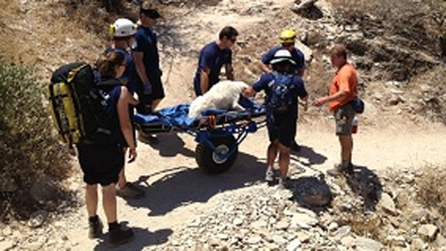 Dog rescued off Gateway Loop Trail in Scottsdale. (Source: Scottsdale Fire Department)