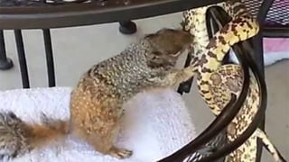 "Snake vs. squirrel in back patio ""brawl."" (Source: CBS 5 News)"