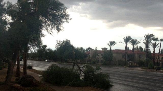 Trees down in the area of 48th Street and Ray Road. (Source: Rebecca Thomas, cbs5az.com)