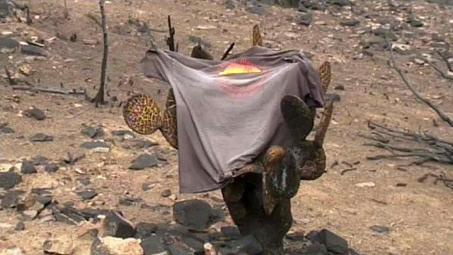 Visitors are asked to touch this Granite Mountain Hotshots T-shirt at the site as a sign of respect for the fallen firefighters. (Source: CBS 5 News)