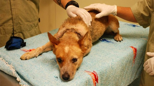 (Source: Pinal County Animal Care & Control)