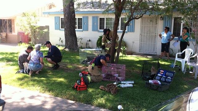 1 Person 10 Pets Escape Scottsdale House Fire Arizona S