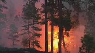 2011 Wallow Fire (Source: CBS 5 News)
