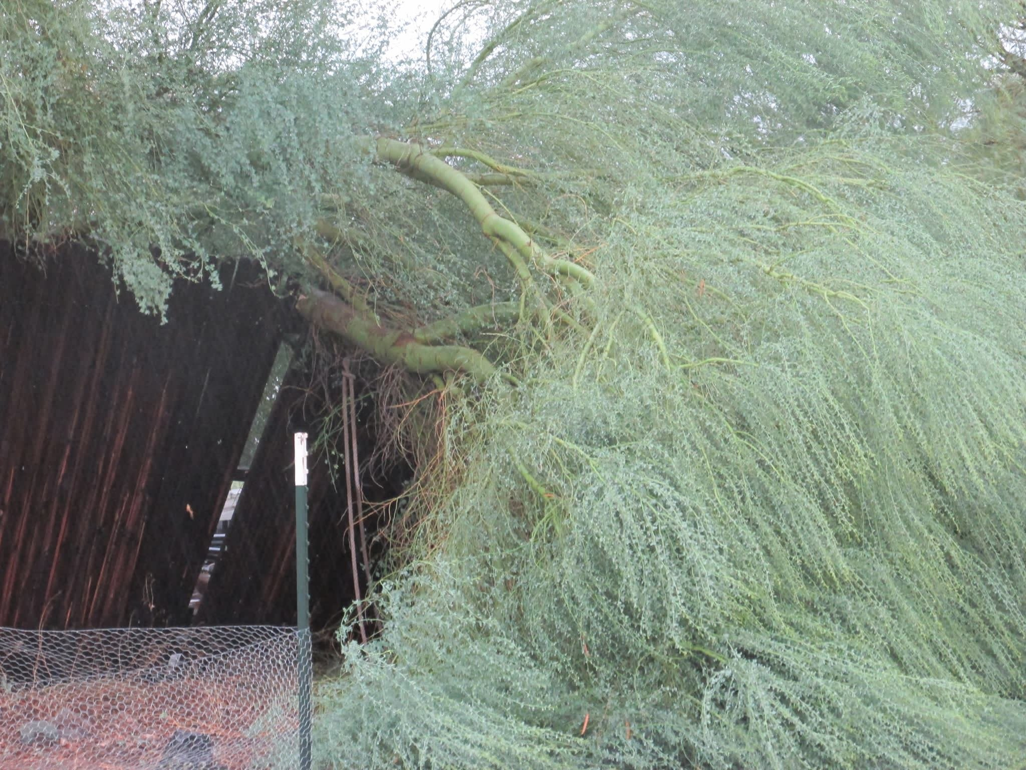 Trees down in Apache Junction (Photo credit: Kelli Tyger Wagner)