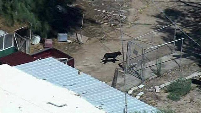 A dog runs loose on the property of a man sheriff's deputies said was selling tick-infested dogs. (Source: CBS 5 News)