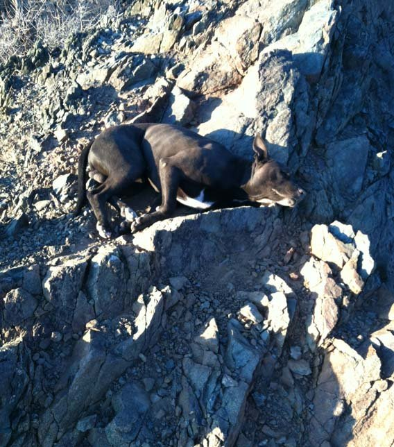 Andi Davis rescued the nearly dead pit bull. (Source: Arizona Humane Society)
