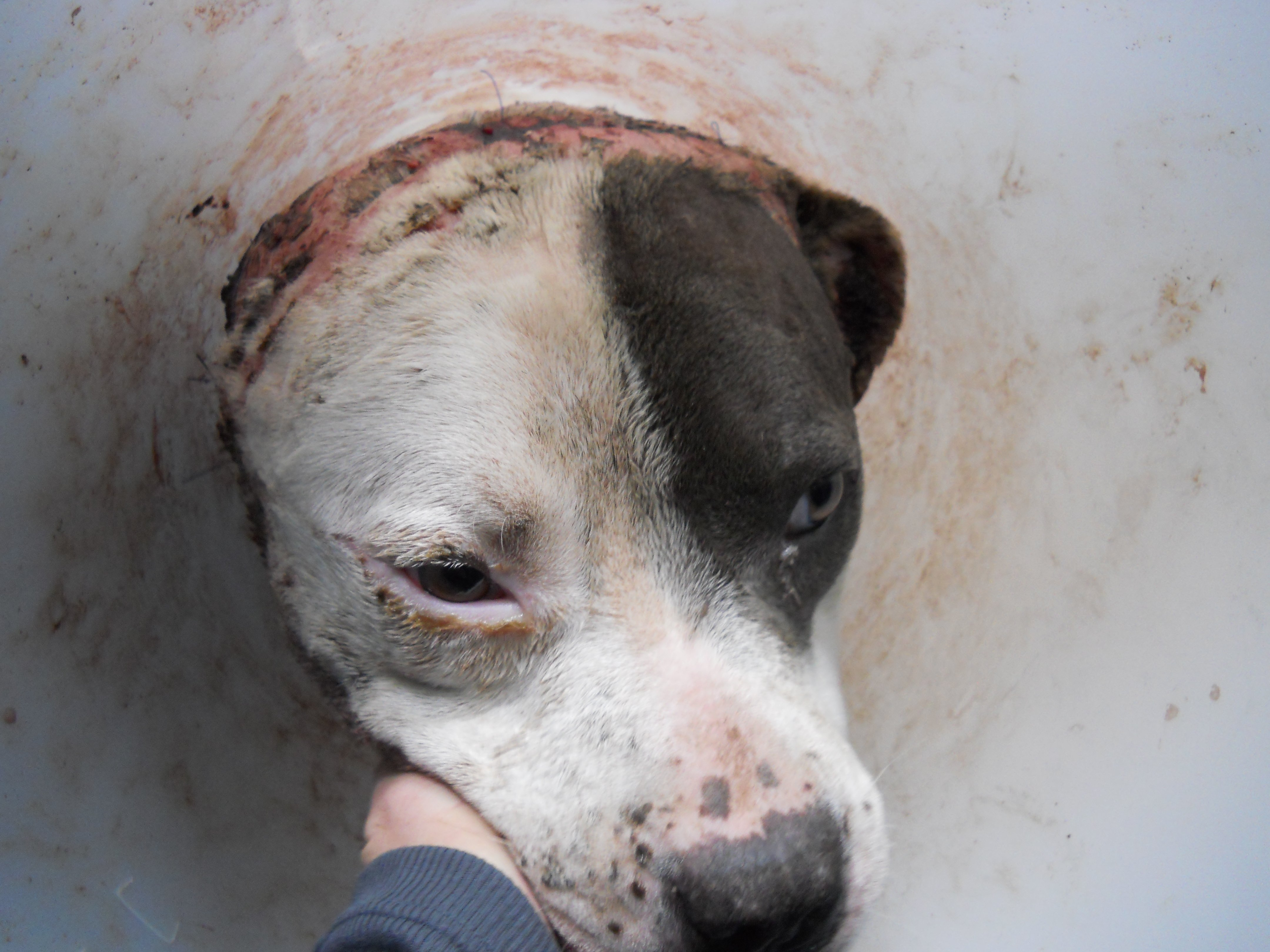 *GRAPHIC* (Source: Maricopa County Animal Care and Control)