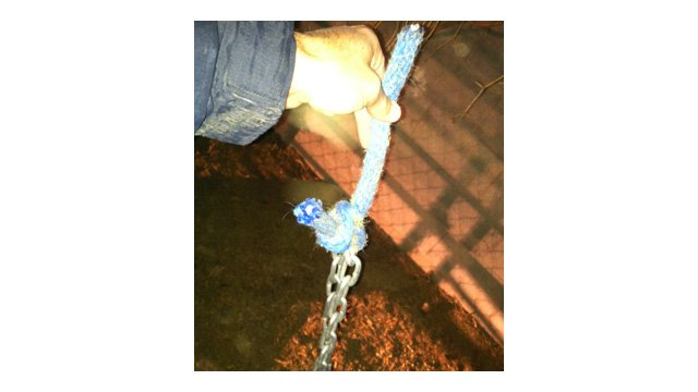 A chain and rope used to tether one of the tigers. (Source: AZ Game and Fish Dept.)